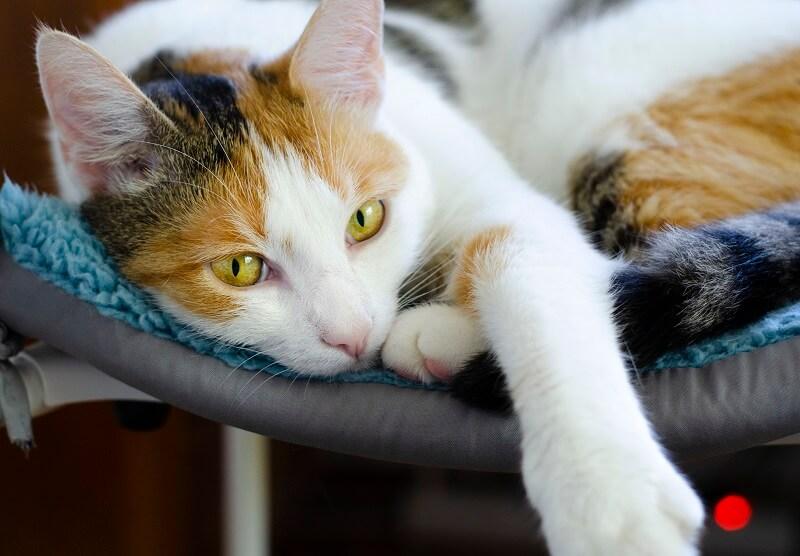 5 jel, ami arra utal, hogy a macskád megbízik benned